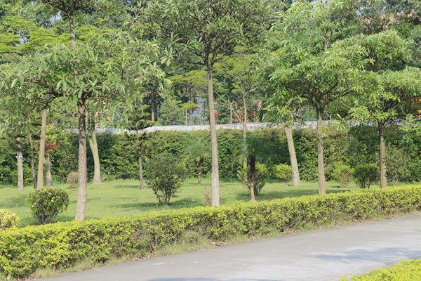飞尔博园艺景观